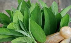 Германски научници откриваат- овој чај помага во борбата против коронавирусот